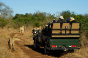 Safari vehicle with tourists watching lions, Thanda Game Reserve