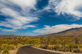Desert Landscape in Saguaro National Park