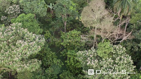 Drone Video Jungle Canopy Ecuador