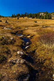 Stream in Alpine Meadow along the Beartooth Highway