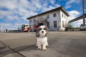 Small White and Gray Dog Near SF Bay Bridge and Fire Station