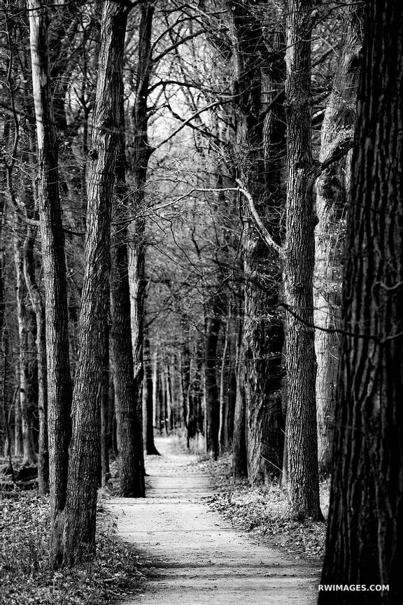 TALL TREES FOREST TRAIL CHICAGO NORTH SHORE RYERSON WOODS FOREST PRESERVE RIVERWOODS ILLINOIS MIDWEST LANDSCAPE NATURE BLACK ...