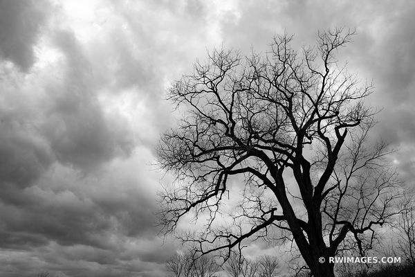 WINTER TREE CHICAGO NORTH SHORE MIDDLEFORK SAVANNA LAKE FOREST ILLINOIS MIDWEST LANDSCAPE NATURE BLACK AND WHITE
