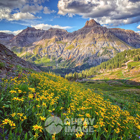 Potosi Peak Summer Bloom