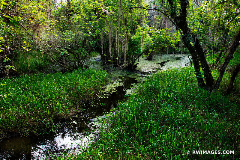 KIRBY STORTER PARK BIG CYPRESS NATIONAL PRESERVE EVERGLADES FLORIDA