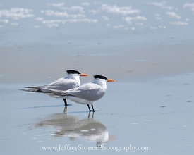 Two by Tern