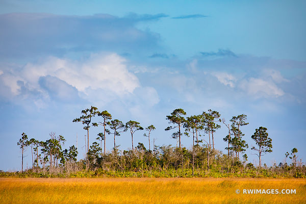 CYPRESS DOME PRAIRIE GRASSLANDS EVERGLADES FLORIDA COLOR LANDSCAPE