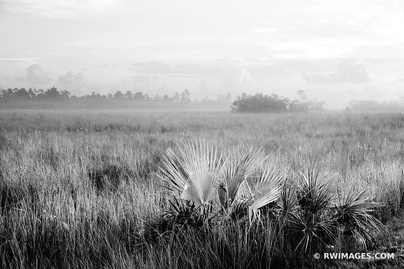 DAWN AT LAKE EVERGLADES NATIONAL PARK FLORIDA BLACK AND WHITE