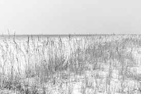 Beach Dune Grass and Sea Oats Florida Black and White Photo