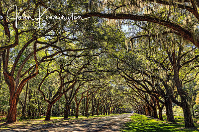 Wormsloe Plantation Drive, Savannah, Georgia