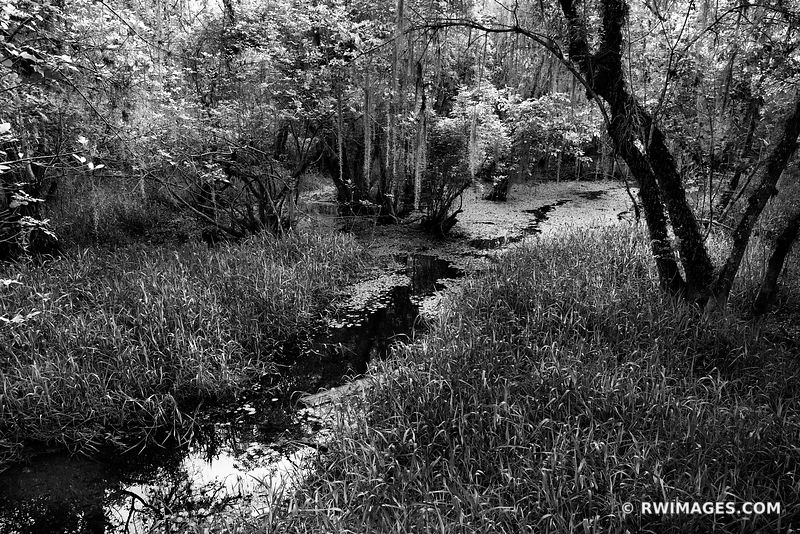 KIRBY STORTER PARK BIG CYPRESS NATIONAL PRESERVE EVERGLADES FLORIDA BLACK AND WHITE