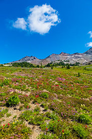 Wildflowers in the Goat Rocks Wilderness