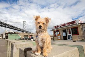 Terrier Mix Dog Sitting Near Reds Java House on SF Waterfront
