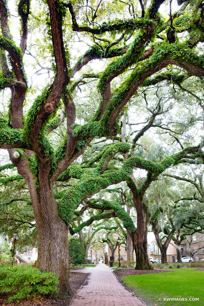 CHATHAM SQUARE LIVE OAK TREES SAVANNAH GEORGIA
