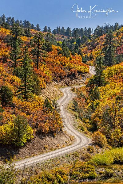 Autumn Road (Vertical), Ridgway, Colorado