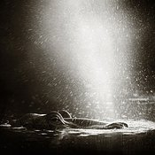 Hippo spraying / blowing water in the air - b&w fine art