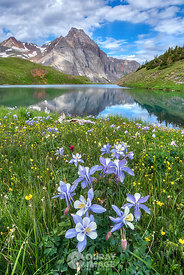 Columbine at Middle Blue Lake, Sneffels Range