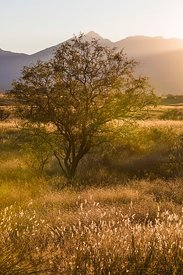 Afternoon Light on Empire Ranch in Arizona