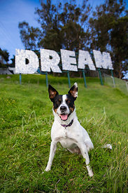 Smiling Cattle Dog Mix in Front of Dream Sign on Hill