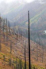 Burned Forest in Kootenay National Park