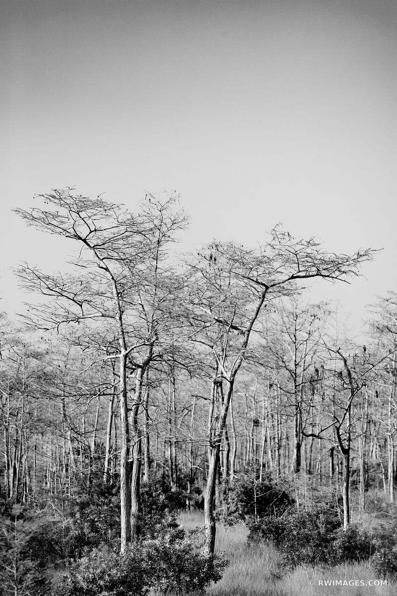 KIRBY STORTER ROADSIDE PARK BIG CYPRESS NATIONAL PRESERVE EVERGLADES FLORIDA BLACK AND WHITE VERTICAL