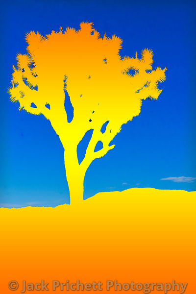 Joshua Tree, graphic art silhouette in yellow-gold