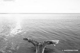 DRIFTWOOD LAKE MICHIGAN WASHINGTON ISLAND DOOR COUNTY WISCONSIN BLACK AND WHITE