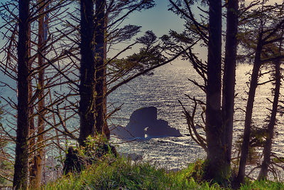 oregon_coast-46