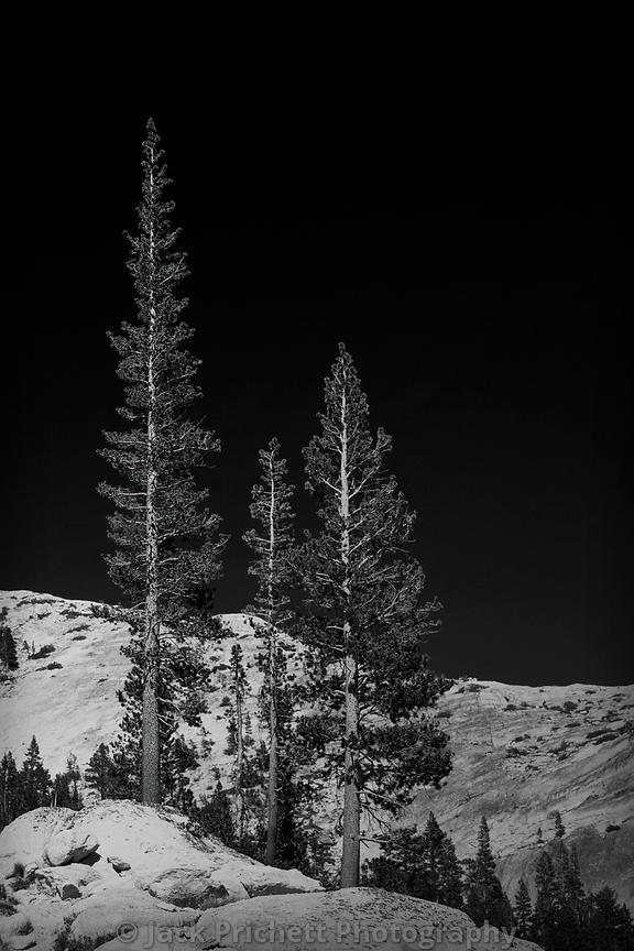 High Sierra 4-Pines and Granite BW 8x12