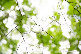 NATURE ABSTRACT FOREST CANOPY WASHINGTON ISLAND DOOR COUNTY WISCONSIN