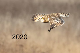 Front Cover - Short-eared Owl