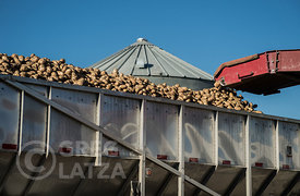 Unloading potatoes into a truck in Oregon.
