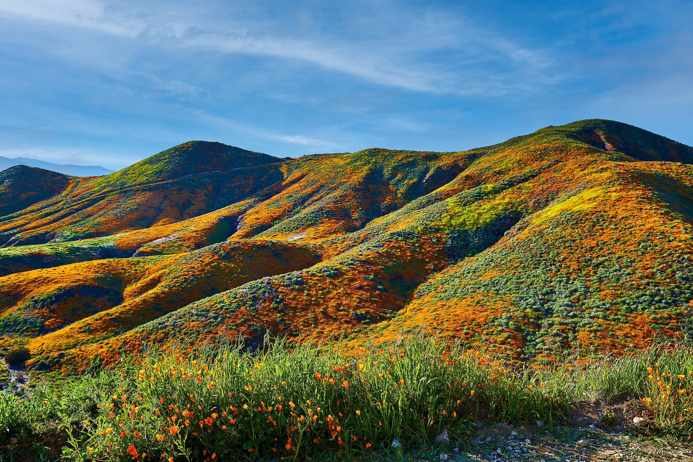 Walker Canyon Poppy Field