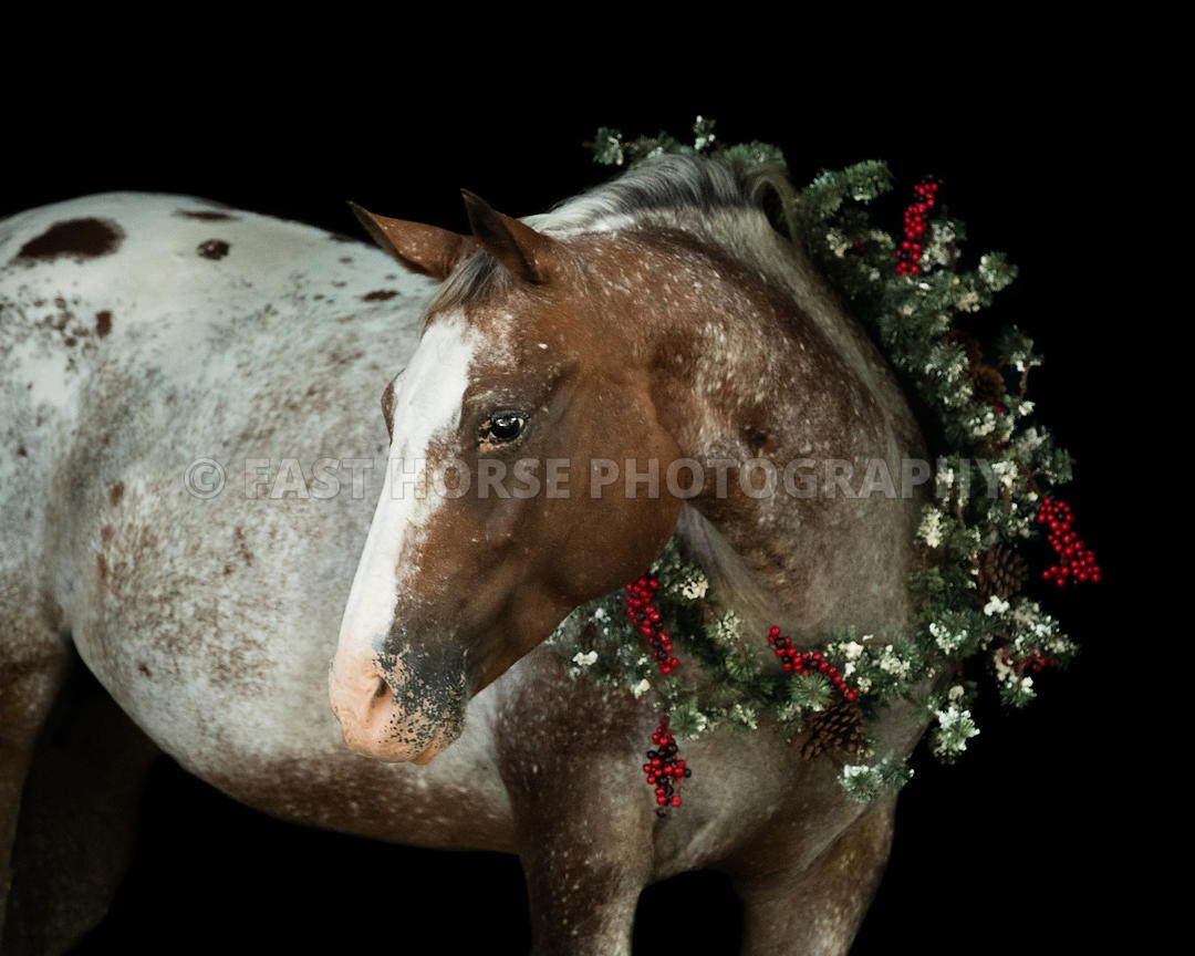 Fast Horse Photography Christmas Horse