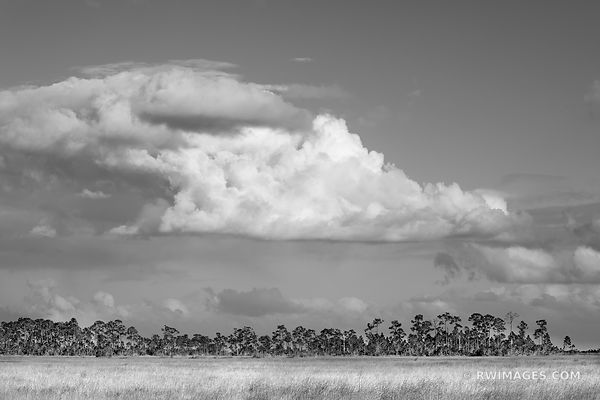 CYPRESS DOME PRAIRIE GRASSLANDS EVERGLADES FLORIDA BLACK AND WHITE LANDSCAPE
