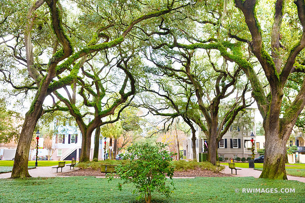 PULASKI SQUARE LIVE OAK TREES SAVANNAH GEORGIA