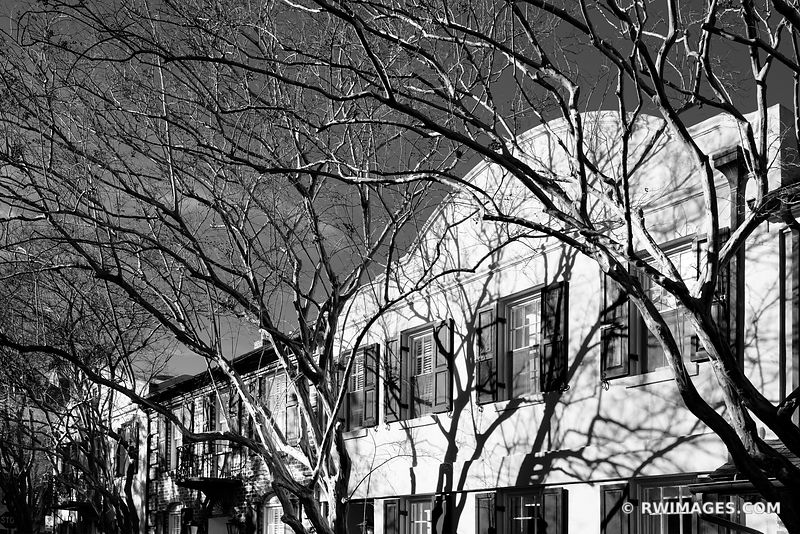 TREES CHARLESTON SOUTH CAROLINA BLACK AND WHITE