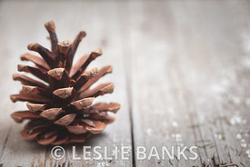 Pine Cone on a Rustic Wooden Background