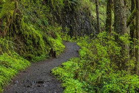 Trail in Silver Falls State Park