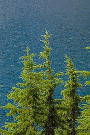Mountain Hemlocks at Edge of Snow Lake