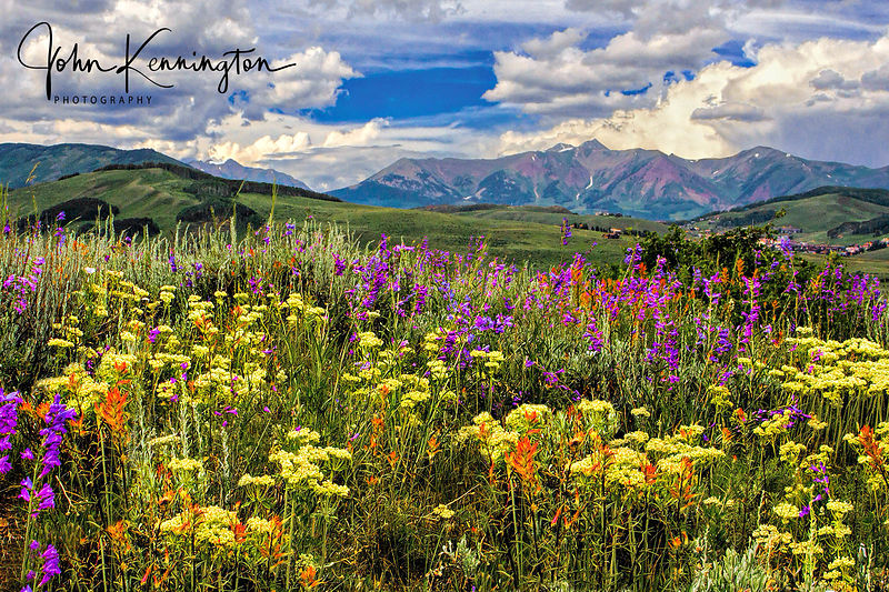 Wildflowers Above Crested Butte, Colorado