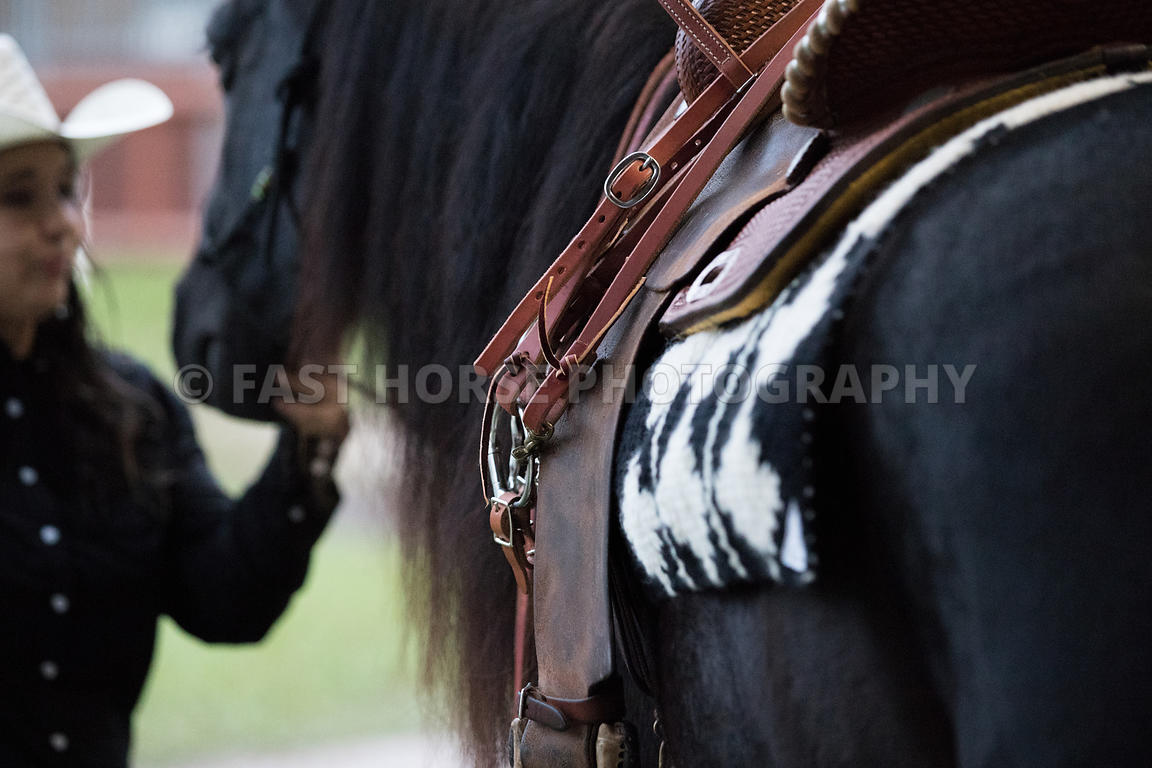 Fast Horse Photography Equestrians Put Western Tack On Their Horse