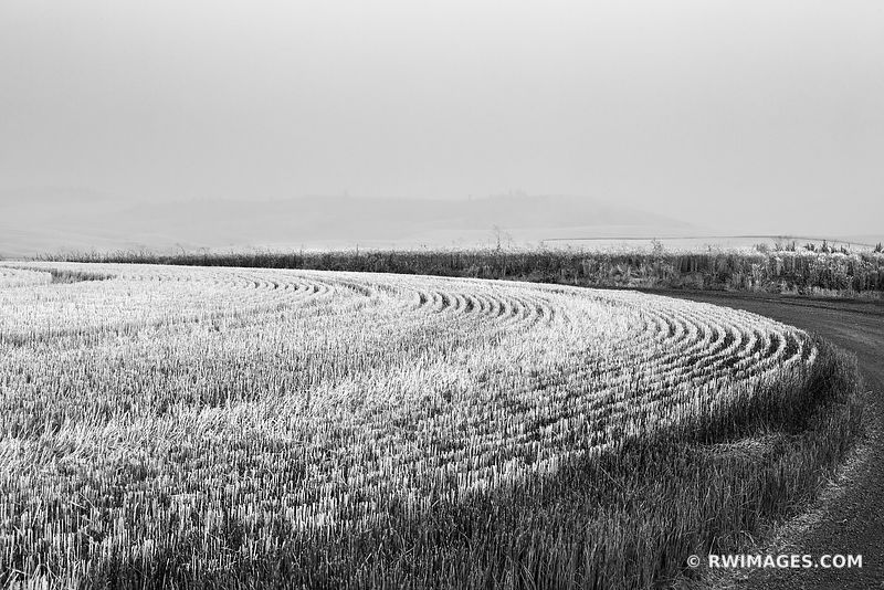 WHEAT FIELD COUNTRY ROAD PALOUSE WASHINGTON BLACK AND WHITE LANDSCAPE