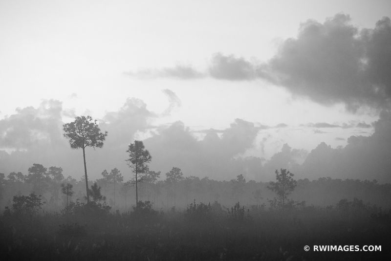 DAWN EVERGLADES NATIONAL PARK FLORIDA BLACK AND WHITE LANDSCAPE