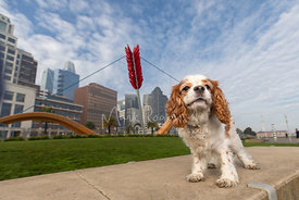 King Charles Spaniel Near Bow and Arrow Sculpture in San Francisco