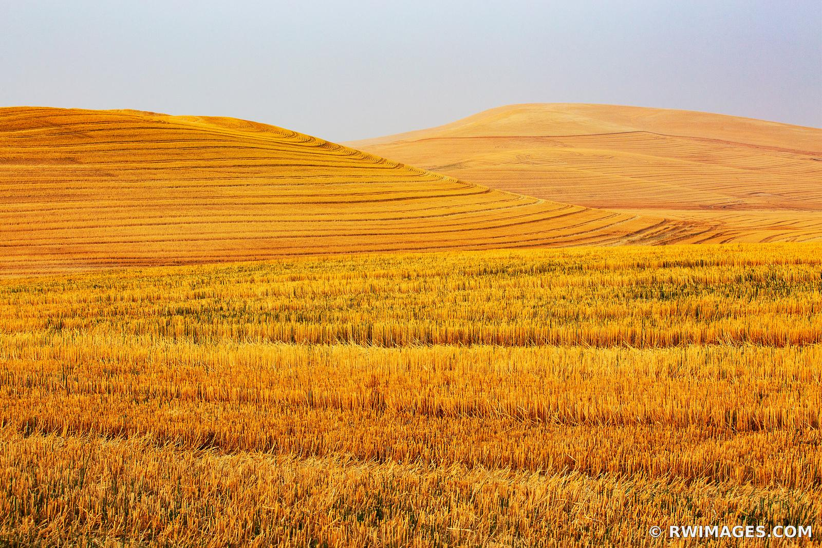 WHEAT FIELD AFTER SUMMER HARVEST PALOUSE REGION EASTERN WASHINGTON STATE LANDSCAPE