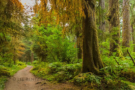 Hoh River Trail in Olympic National Park