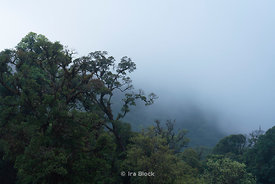 Early morning fog at Doi Inthanon National Park in  Chiangmai, Thailand