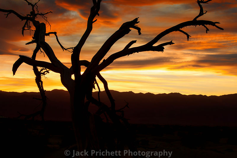 Desert dead tree silhouetted at sunset