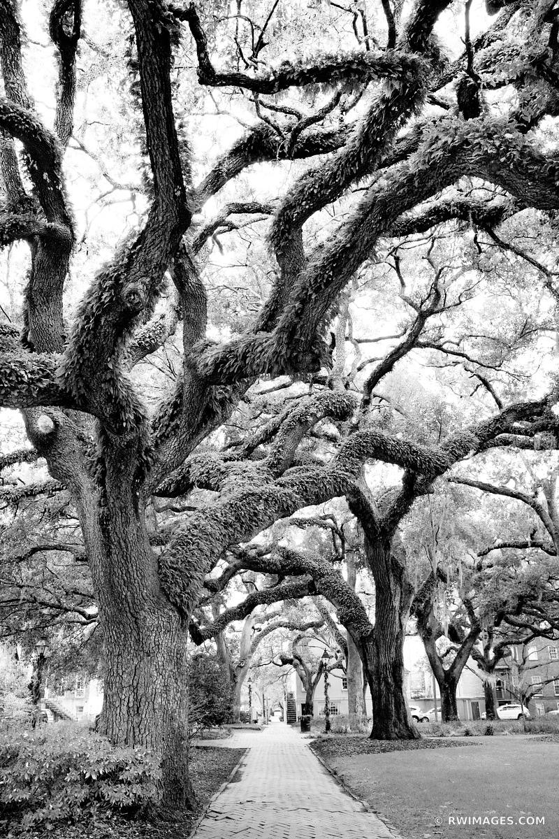 CHATHAM SQUARE LIVE OAK TREES SAVANNAH GEORGIA BLACK AND WHITE